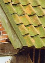 Dachsanierung, Dachdeckung, Grünbildung, Dächer, Algen, Moos, Flechten, Dachziegel, Dachpfannen,  Arbeitsgemeinschaft Ziegeldach, Dach, Dachhinterlüftung