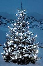 Beleuchtung, LED, Lichterketten, Lichterkette, Weihnachtsbeleuchtung, Leuchtdioden, LED, Lämpchen, LED Lichterketten, Vorgärten, Steckdose, Glühlampen
