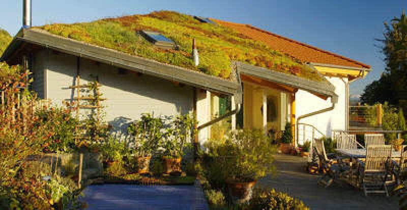 begrünte Schrägdächer, begrüntes Dach, grünes Steildach, Dachbegrünung, Gründach, Gründächer, Schrägdach, geneigtes Dach, Begrünung eines Daches, Schrägdach-Begrünung, Dachneigung, Dachentwässerung, Dachabläufe, Wasserspeier, Zusatzbewässerung
