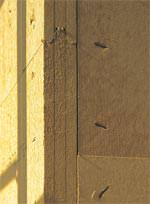 StoTherm Wood