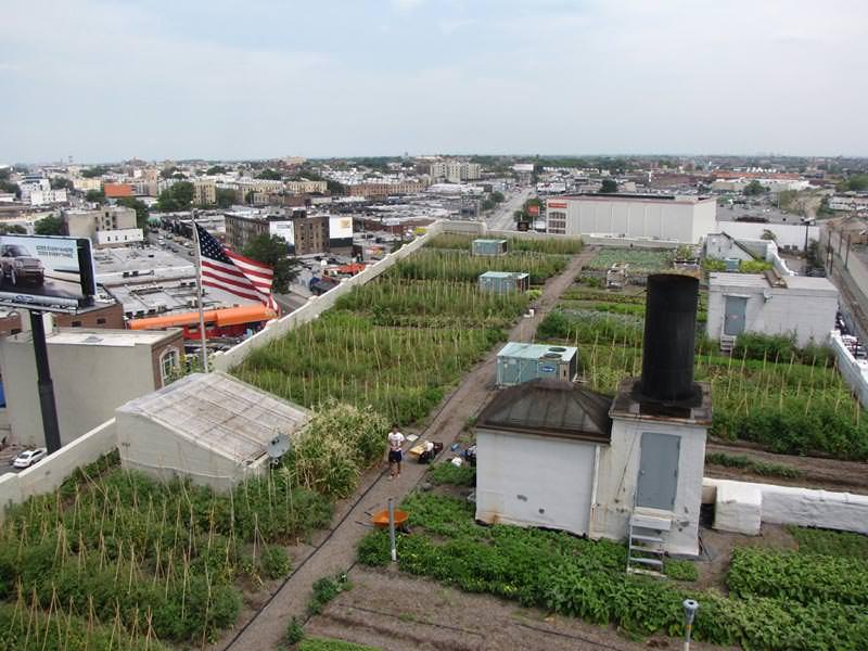 Obst Und Gemüse Vom Gründach | Gemüsegarten Auf'm Dach Mit ... Gemusegarten Auf Dem Dach