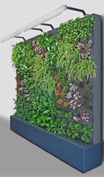 Fassadengarten compact